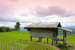 Baan Pa Pong Piang located in Mae Jam, Chiangmai, Thailand. Stock Image