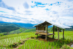 Baan Pa Pong Piang located in Mae Jam, Chiangmai, Thailand this place is farmer plant rice on terrace. Stock Photos