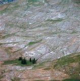 Baard ` s Wheatfield, Jedediah Smith Wilderness, Wyoming stock afbeeldingen