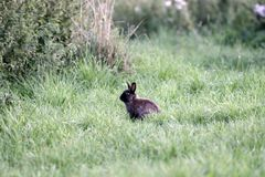 Babbit do bebê Fotos de Stock Royalty Free