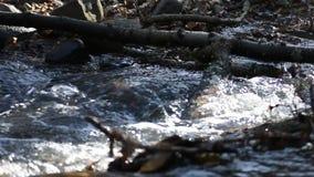 Babbling beek in het de lentebos stock video
