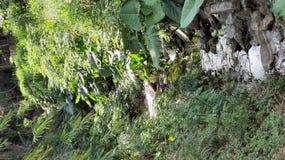 Babbling Brook 3 Stock Image