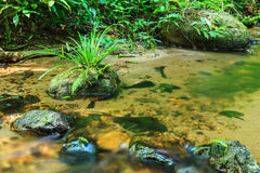 Babbling Brook in Green Forest Stock Photos