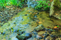 Babbling Brook in Green Forest Royalty Free Stock Photos