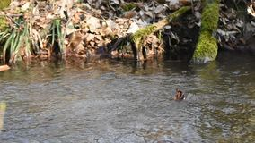 Babbling Brook In The Spring Forest Stock Footage - Video of