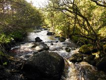 Rushing Stream, Ireland. A babbling stream in Spring rushes through a green glen near Glendalough, Ireland Stock Photos