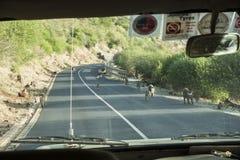 Babbuini sulla strada in Tanzania fotografie stock