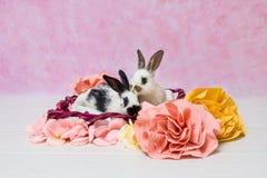 Babby rabbits Stock Photo