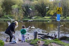 Babcia i jej z podnieceniem wnuk karmimy kaczki przy Shaw ` s mostem na Rzecznym Lagan w Południowym Belfast w Północnym - Irelan zdjęcia stock