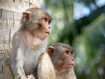 Babe monkeys Stock Photography