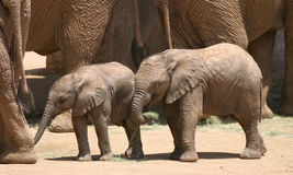 Babies Amongst Giants Stock Image