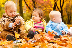 Babies in autumn park Stock Images