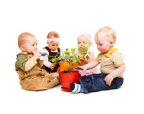 Babies and flower Stock Photo