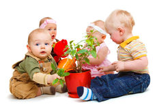 Babies group. A group of beautiful babies sitting around a potted plant Stock Image