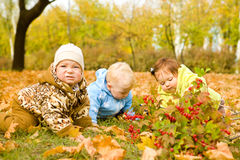 Babies on leaves Royalty Free Stock Image