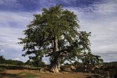 Baboab-Baum Adansonia digitata in einem Dorf von Burkina Faso Stockfotos