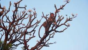Baboon ο πίθηκος κάθεται στο δέντρο φιλμ μικρού μήκους