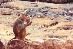 Baboon κατάψυξη πιθήκων στο ζωολογικό κήπο Στοκ φωτογραφία με δικαίωμα ελεύθερης χρήσης