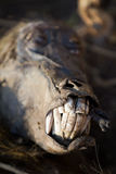 Baboon face Royalty Free Stock Photography