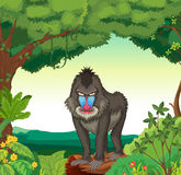 Baboon. Illustration of a baboon standing in a jungle Stock Photos