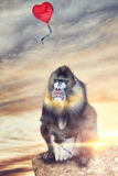 Baboon looking like a balloon escapes with heart shape Stock Photography