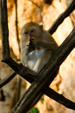 Baboon monkey on the tree. In the jungle stock images