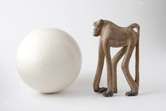 Baboon and ostrich egg Stock Photography