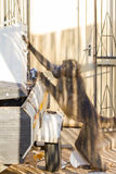 Baboon Tobacco Thief stock photo