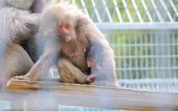 Baboons που κάθονται κοντά Στοκ φωτογραφίες με δικαίωμα ελεύθερης χρήσης