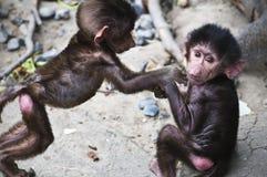 baboons behandla som ett barn spädbarn Royaltyfria Bilder