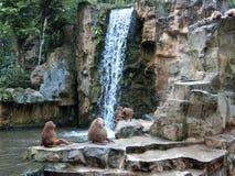 Baboons Hamadryas Στοκ Εικόνες