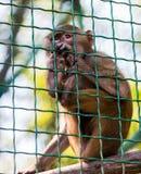 Babuino animal joven del mono Fotos de archivo