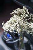 Baby& x27; цветки дыхания s в автомобиле Стоковые Фотографии RF