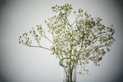 Baby& x27; цветки дыхания s Стоковые Изображения RF