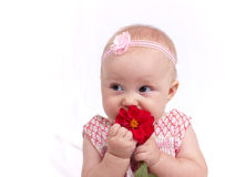 Baby. Beautiful baby girl holding flower Royalty Free Stock Images