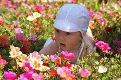 Baby 13 Stock Photos