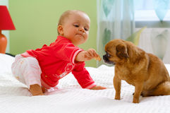 Baby. Little girl on sofa with dog royalty free stock photos