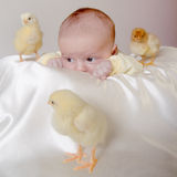 Baby and 3 chicken Royalty Free Stock Image