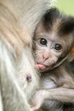 Baby. Monkey in a histirorical park at Asia Stock Photos