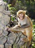 Baby-Affe lizenzfreies stockbild