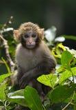 Baby-Affe lizenzfreie stockfotos