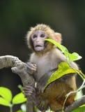 Baby-Affe lizenzfreie stockfotografie