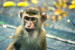 Baby-Affe, der nach etwas sucht Stockfotografie