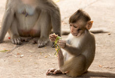 Baby-Affe im Park Lizenzfreies Stockfoto