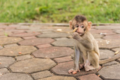Baby-Affe im Park Lizenzfreie Stockfotos