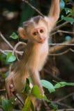 Baby-Affe-kletternder Baum Lizenzfreie Stockfotos