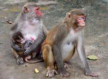 Baby-Affe mit Elternteil Lizenzfreie Stockfotografie