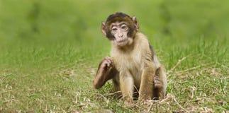 Baby-Affe-Sitzen Lizenzfreie Stockfotos