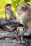 Baby-Affe und Familie Stockbild
