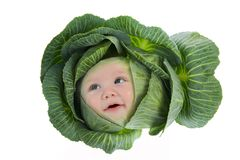 Baby Among Cabbage Leaves Royalty Free Stock Images
